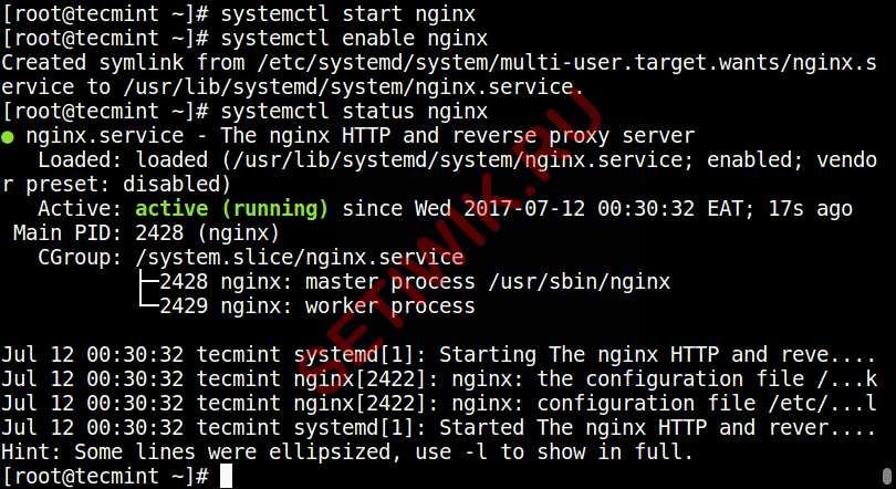 Запустите и добавьте Nginx в автозагрузку